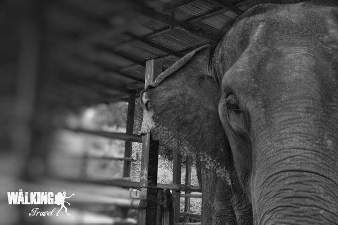 24/10/15 Elephant Retirement Park.